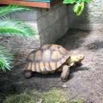 A turtle out of its shell, walking next to a building