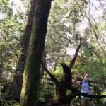 A SWAG summer session counselor waving at the camera from under two tall trees during an outdoor field trip