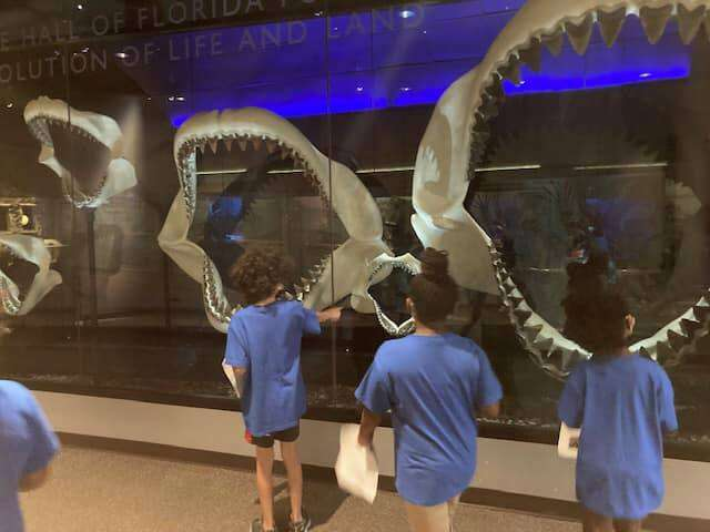 Two SWAG summer session students examine large shark jawbones on display at the Florida Museum of Natural History